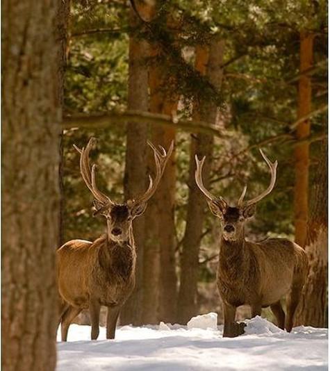 7_1_1_Lacuniacha ciervos